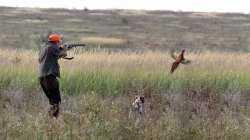 На следующей неделе в Астраханской области начнется сезон охоты