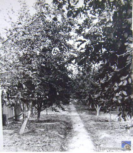 Сад школы №6